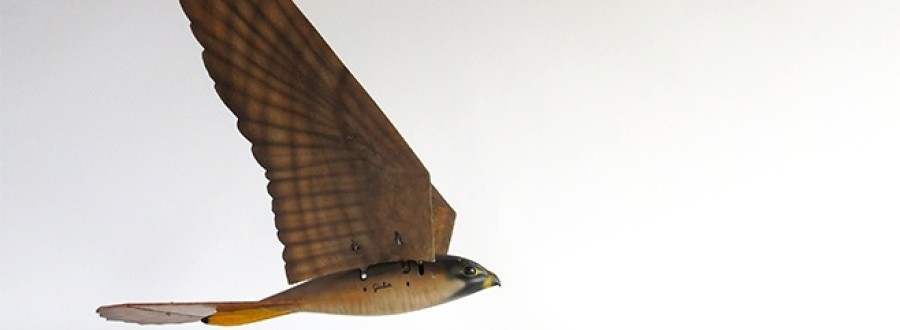 3D Printed Falcon Is New Flying Robot Scarecrow
